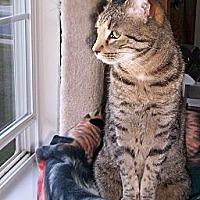 Adopt A Pet :: Kobe - Pineville, NC