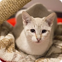 Adopt A Pet :: Spooky - Lincoln, NE