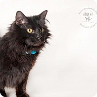 Adopt A Pet :: Jefferson - Alexandria, VA