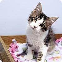 Adopt A Pet :: Moose - Verona, WI