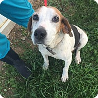 Adopt A Pet :: Bonnie - Sparta, NJ