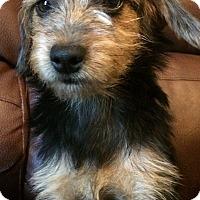 Adopt A Pet :: Minnie - Kittery, ME