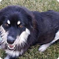 Adopt A Pet :: BREE - joliet, IL