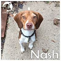 Adopt A Pet :: Nash - Novi, MI