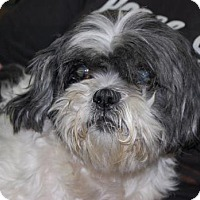 Adopt A Pet :: Wheeler - Brooklyn, NY