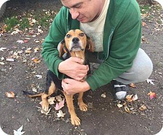 Beagle Mix Dog for adoption in Amherst, Ohio - ELIZA