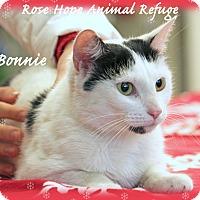 Adopt A Pet :: Bonnie - Waterbury, CT