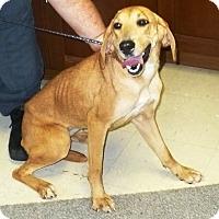 Adopt A Pet :: Lovebug - Eastpoint, FL