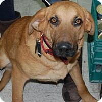 Adopt A Pet :: Max Jr. - Brooklyn, NY