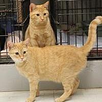 Adopt A Pet :: Sundance & Stardance - Yukon, OK