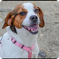 Adopt A Pet :: Tris - Brick, NJ