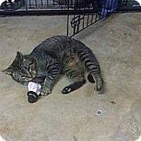 Adopt A Pet :: Dapple - Wakinsville, GA