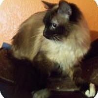 Adopt A Pet :: Saki - Ennis, TX