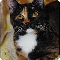 Adopt A Pet :: Anneliese - New Port Richey, FL