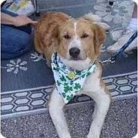 Adopt A Pet :: Chelby - Orlando, FL