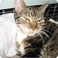 Adopt A Pet :: Sara - Mission, BC