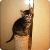 Adopt A Pet :: Kahlua - Irvine, CA