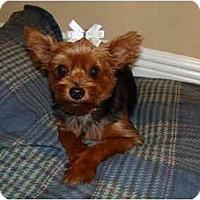 Adopt A Pet :: Sheba - Gulfport, FL