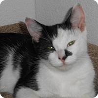 Adopt A Pet :: Tinkerman - North Highlands, CA