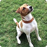Adopt A Pet :: Kip In Austin ADOPT PENDING - San Antonio, TX