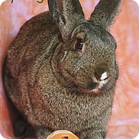Adopt A Pet :: Spring - Santa Barbara, CA