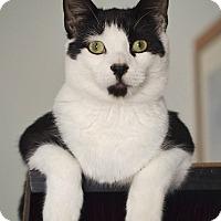 Adopt A Pet :: Pongo - Brooklyn, NY