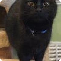 Adopt A Pet :: Dakota - Breinigsville, PA
