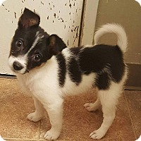 Adopt A Pet :: Rex - Santa Rosa, CA