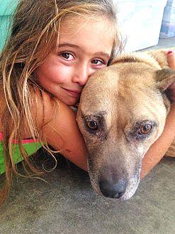 Pit Bull Terrier Mix Dog for adoption in Vista, California - Sunshine