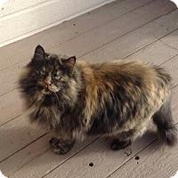 Adopt A Pet :: Chanel - Boise, ID