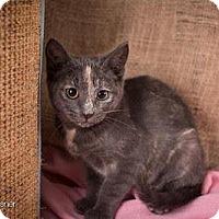 Adopt A Pet :: Sophie - Lambertville, NJ