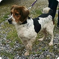 Adopt A Pet :: Truman - Richmond, VA