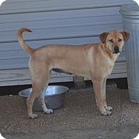 Adopt A Pet :: Trudy - Groton, MA