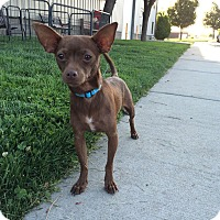 Adopt A Pet :: Luau - Meridian, ID