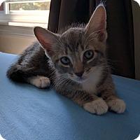 Adopt A Pet :: Mingus - Brooklyn, NY