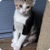 Adopt A Pet :: Dreamer 161264 - Atlanta, GA