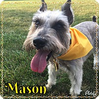 Adopt A Pet :: Mason - Sharonville, OH