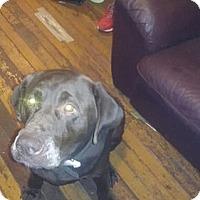 Adopt A Pet :: Milo - Buckeystown, MD