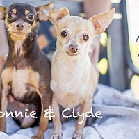 Adopt A Pet :: BONNIE - Inland Empire, CA