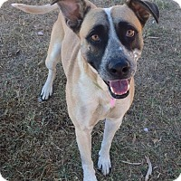 Shepherd (Unknown Type) Mix Dog for adoption in Corning, California - Ace
