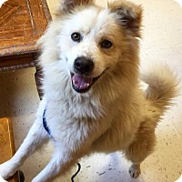 Adopt A Pet :: Colton of Indianapolis Indiana - Lindsey, OH