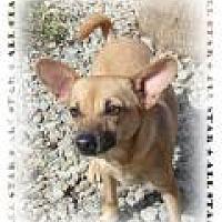 Chihuahua Mix Dog for adoption in Las Vegas, Nevada - Kayla