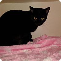 Adopt A Pet :: Nonie - Idaho Falls, ID