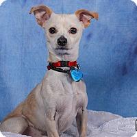 Adopt A Pet :: Bernie - Denver, CO
