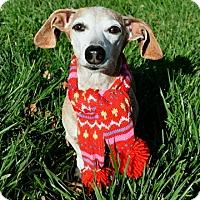 Adopt A Pet :: Dylan - Dublin, CA