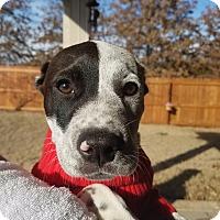 Adopt A Pet :: Baster - Marietta, GA