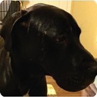 Adopt A Pet :: Merlin - Boonton, NJ