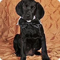 Adopt A Pet :: Nolan - Colmar, PA