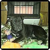 Adopt A Pet :: Little Dude - Wichita Falls, TX