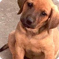 Adopt A Pet :: COME MEET Crystal - Westport, CT